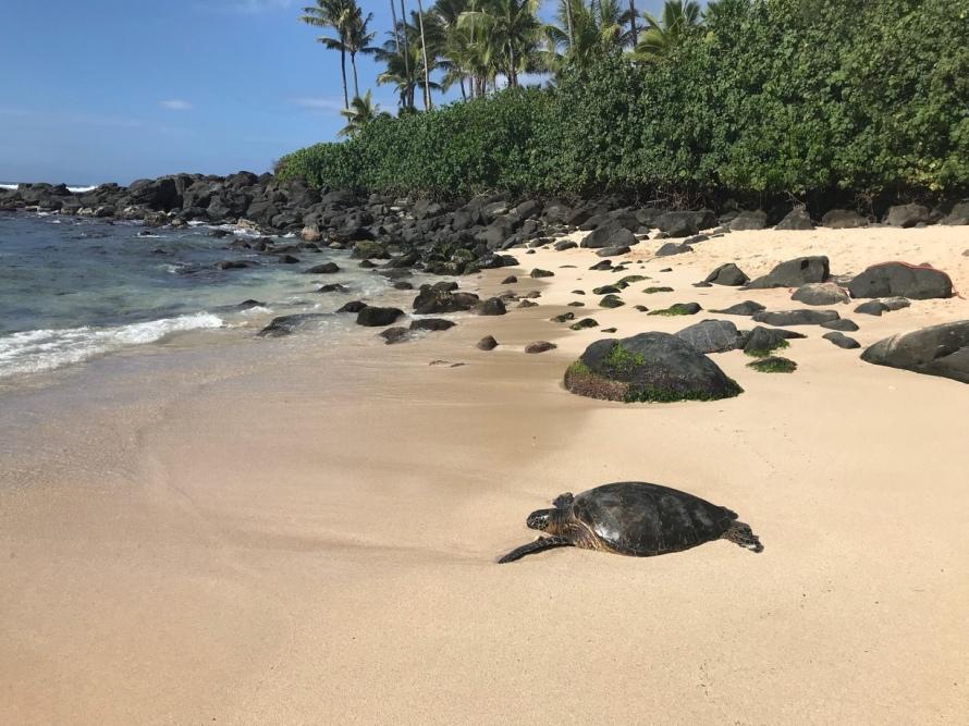 honolulu, waikiki, gorgeous beaches, palm trees, hawaii, sunglasses, hang loose, north shore, oahu, turtle bay