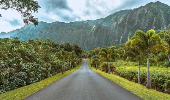 honolulu, waikiki, gorgeous beaches, palm trees, hawaii, sunglasses, hang loose, oahu, lush greenery, hoomaluhia botanical garden
