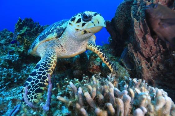 honolulu, waikiki, gorgeous beaches, palm trees, hawaii, sunglasses, hang loose, oahu, hanauma bay snorkeling, turtle, coral reefs