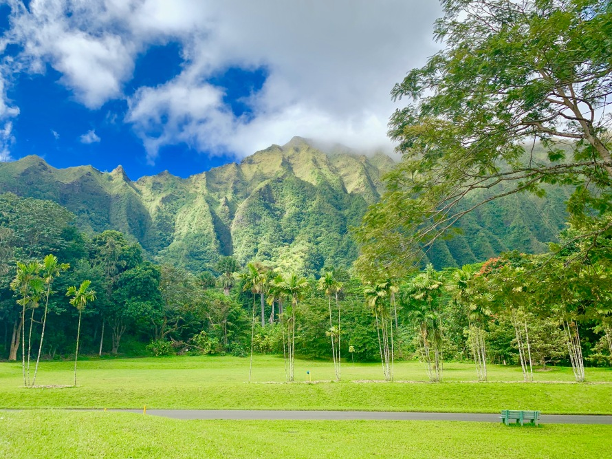 honolulu, waikiki, gorgeous beaches, palm trees, hawaii, sunglasses, hang loose, botanical garden
