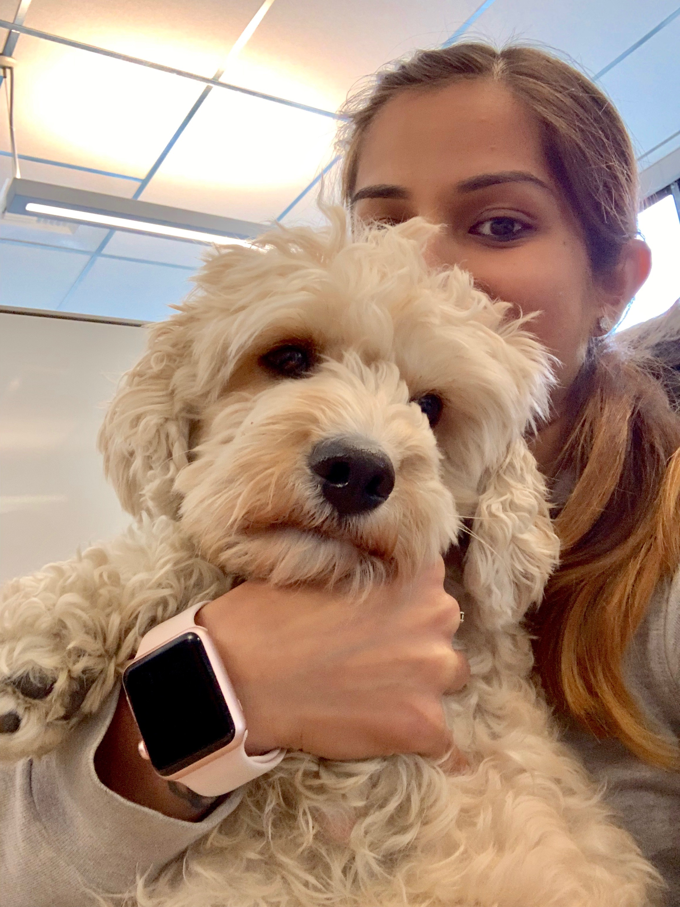 dog travel companion outdoors fun airplane anxiety stress selfies