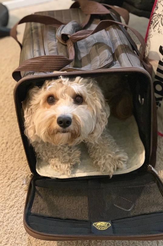 dog travel companion outdoors fun airplane anxiety stress