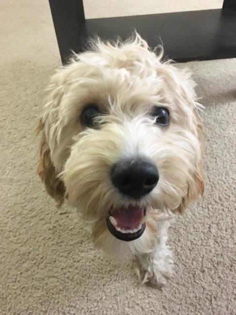 dog travel companion outdoors fun airplane anxiety stress selfies